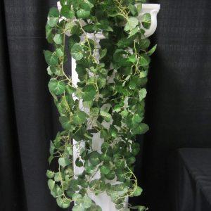 Plants geranium set of two