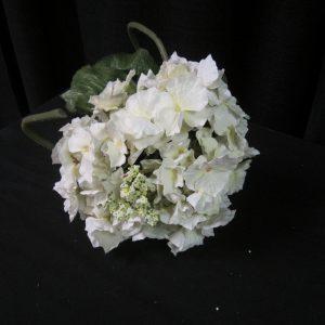 Hydranga white